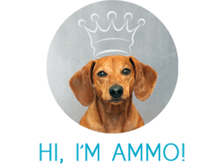 Ammo the Dachshund