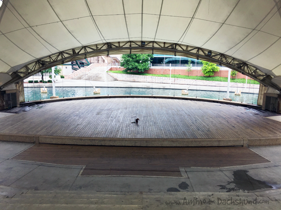 Amphitheater in the World's Fair Park // Knoxville Tennessee // Ammo the Dachshund