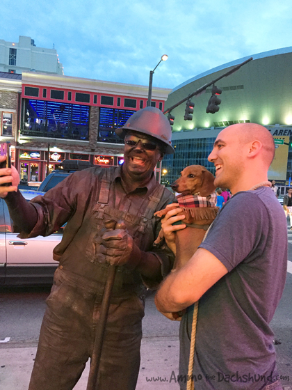 Ammo the Dachshund takes Selfie with Street Performer