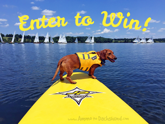 Ruffwear Float Coat Review & Giveaway // Ammo the Dachshund