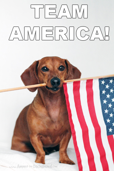 4th of July // Independence Day // Ammo the Dachshund