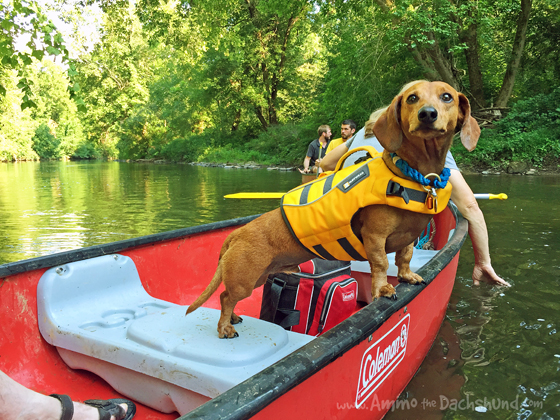 River Tubing with Ammo the Dachshund