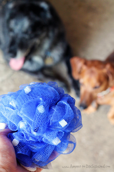 Easily Clean Dirty Barn Dogs with the #WoofPouf from Absorbing + A Giveaway #sp