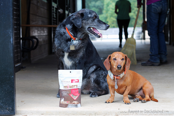 A Boost for Hard Working Farm Dogs from Chewy. com