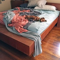 A DIY Solution for Sharing the Bed Comfortably with Your Dog