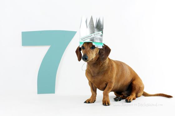 Birthday Week: Happy 7th Birthday to Ammo