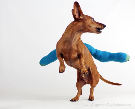 Birthday Week: DIY Snake Dog Toy