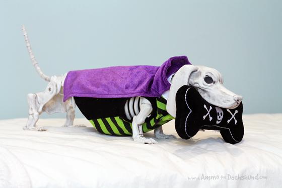Martha Stewart Pets Halloween Toys + A Giveaway