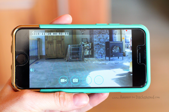 A Wireless Camera to Help Train your Dog + A Giveaway