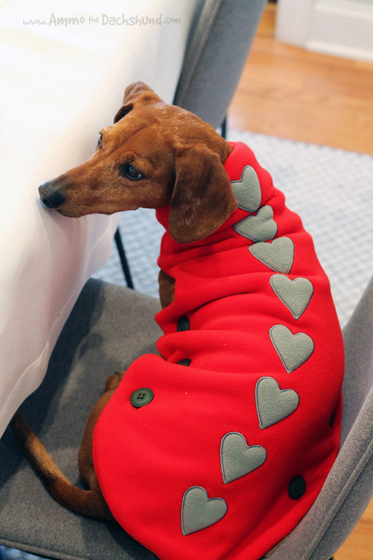 Lupo and Olimp Fleece Dog Coats & Home Accessories + A Giveaway