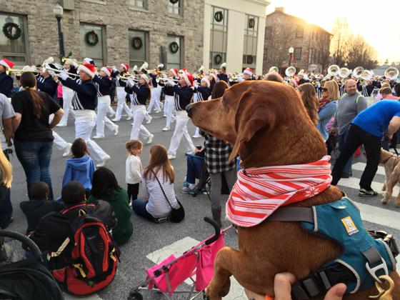 Dog Days of Cheer! Christmas Parade