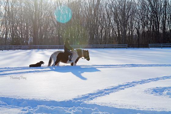 Winter Storm Jonas on the Farm with Ammo the Dachshund