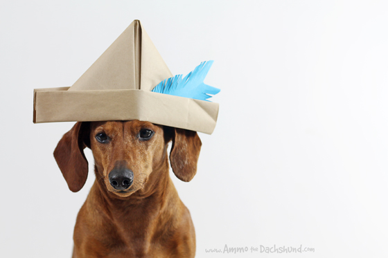 4687bb22f6a National Hat Day with Ammo the Dachshund