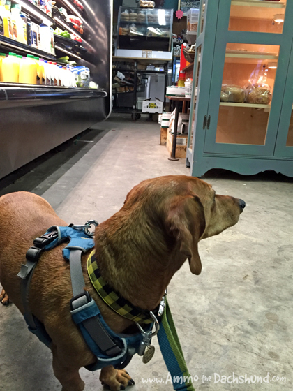 Thanksgiving Road Trip: Pet Friendly Shopping in Charleston