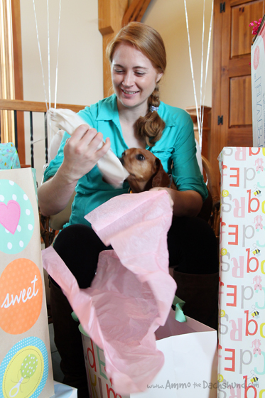 Ammo the Dachshund Celebrates Becoming a Big Brother