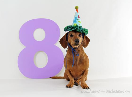 Ammo's 8th Birthday