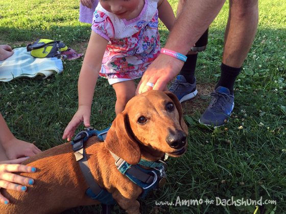 Music in the Park with Ammo the Dachshund