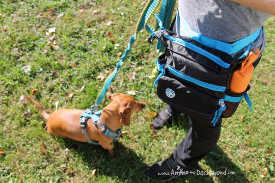 Jasper Swag Dog Walking Bags