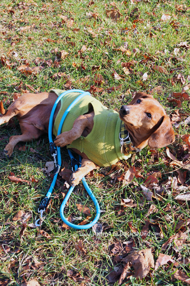 The 5-in-1 Leash You'll Love + A Giveaway