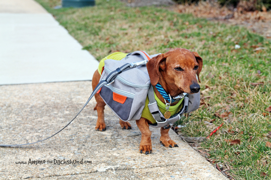 The New Ruffwear Commuter Pack + A Giveaway