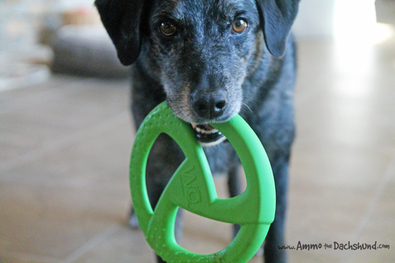 A Dog Toy that Helps Women & Children in Ethiopia + A Giveaway