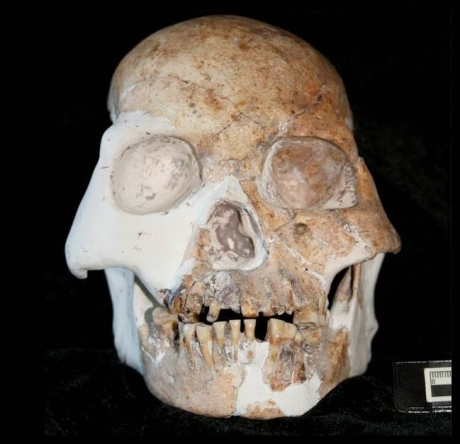 End-of-ice-age fossils that combine modern, archaic, and previously ...