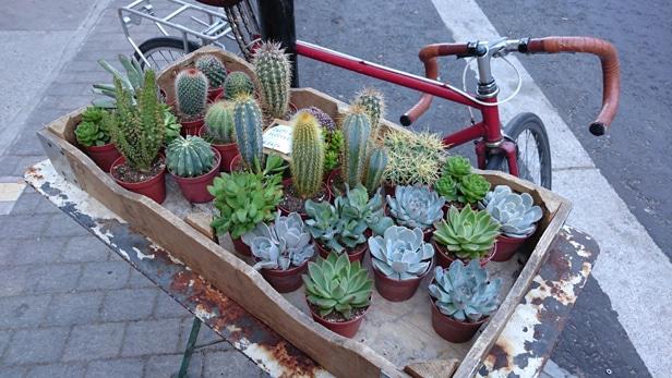 Cactus z4 camera