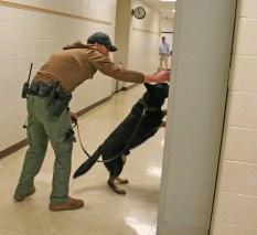 Kendra Peek/kendra.peek@amnews.com Danville K9 Officer Toney Dollins and K9 Petie inspect lockers at the Boyle County Middle School on Thursday.