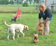 Kristen Wyatt plays with dogs one hot morning.