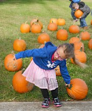 Robin Hart/robin.hart@amnews.com Kyleigh Dedman drags her pumpkin toward the school Monday afternoon after realizing it was too heavy for her to pick it up and carry.