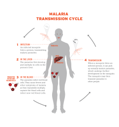 diagram of how malaria is transmitted [ 1162 x 1091 Pixel ]