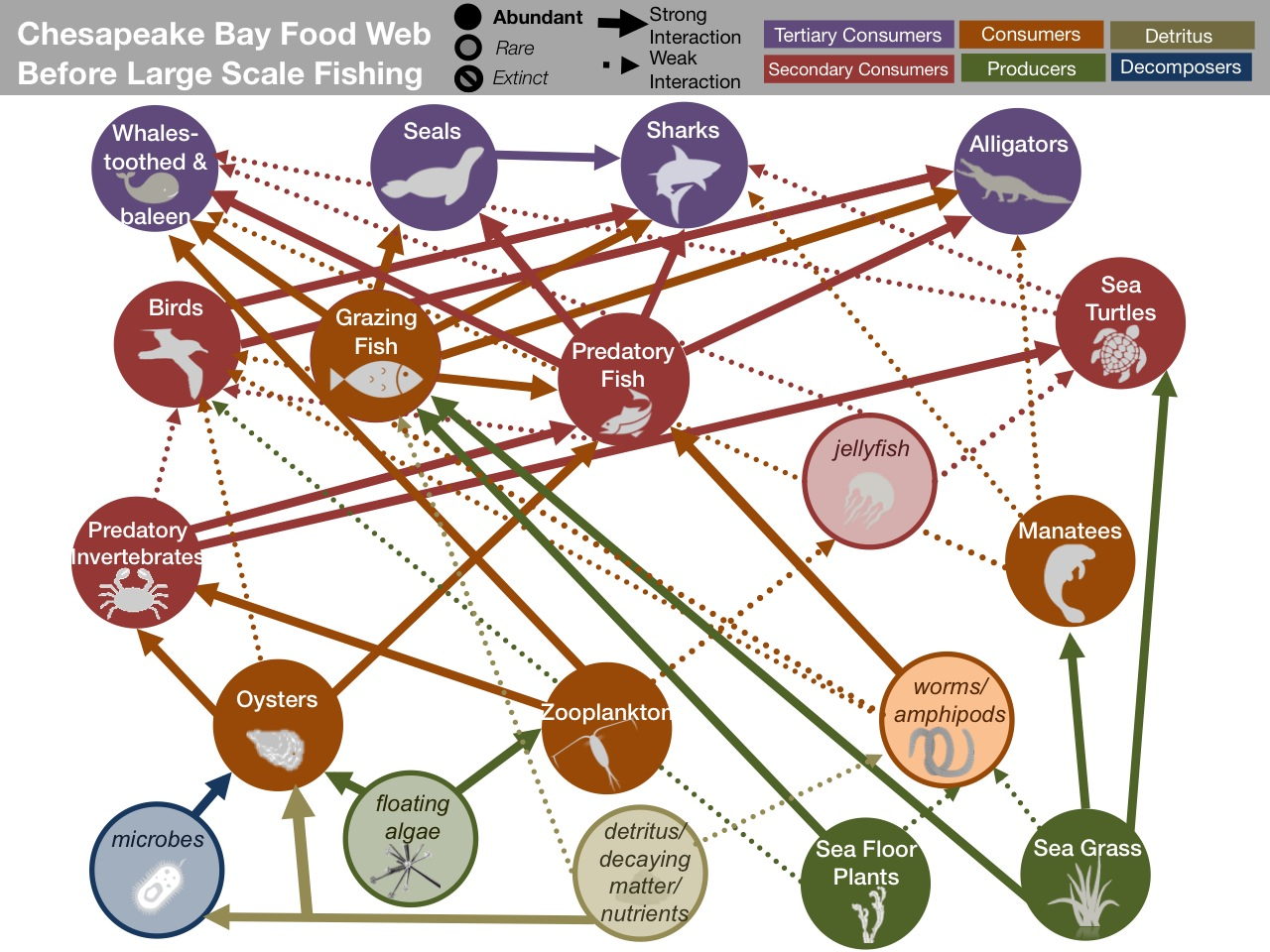 Chesapeake Bay Food Web Worksheet