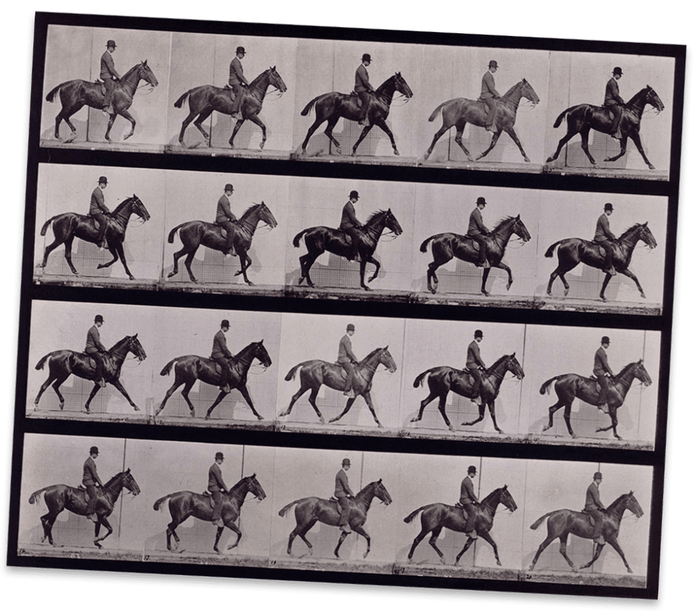 medium resolution of a horse moving captured in many frames on this contact sheet