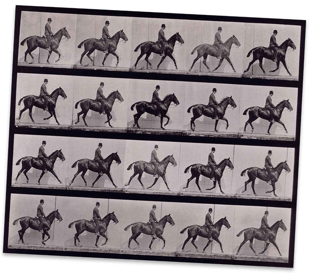 hight resolution of a horse moving captured in many frames on this contact sheet