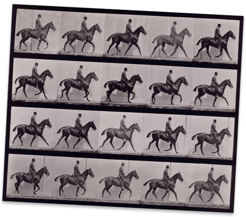 small resolution of a horse moving captured in many frames on this contact sheet