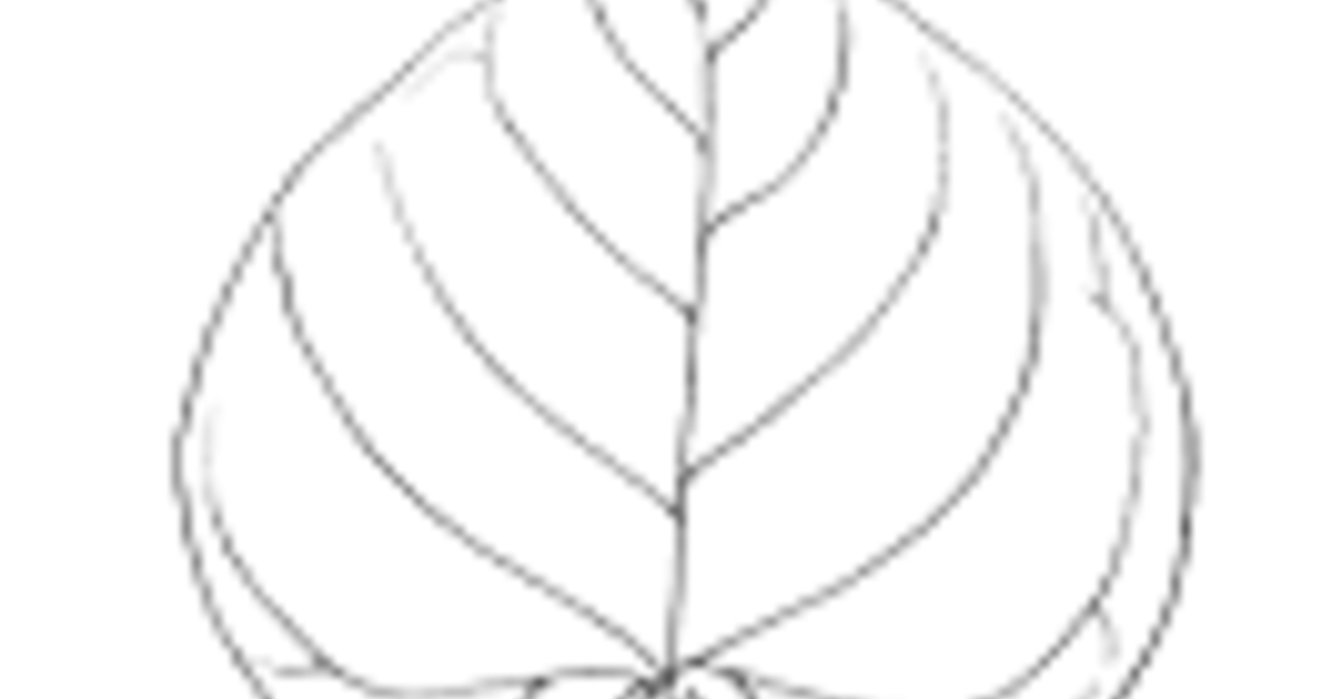 Plant Morphology: Leaf Shape