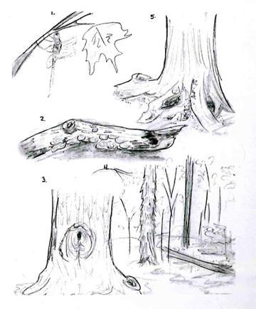 Exploring a Woodlot's Ecosystem