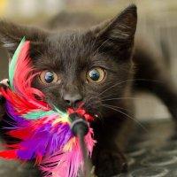 Come educare un gatto che distrugge tutto!