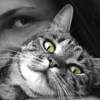 Ho un gatto e sono incinta: tutta la verità sulla toxoplasmosi