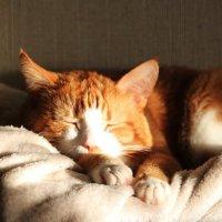 Perchè il gatto mi sveglia all'alba e come farlo smettere