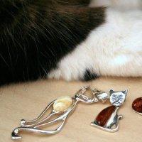 Regali gattosi, perfetti per ogni occasione