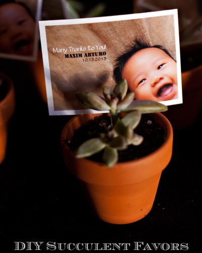 Photo Project: Succulent Favors with Photos