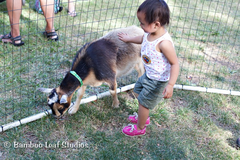 Sharons Mobile Petting Zoo Vacaville