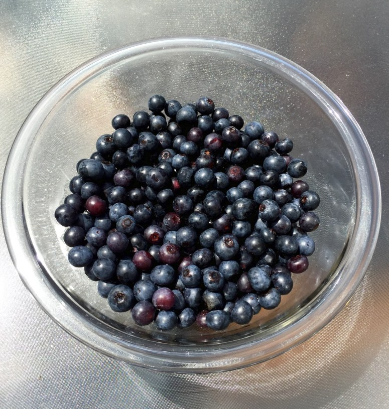 Blueberry Picking - Atlanta, GA
