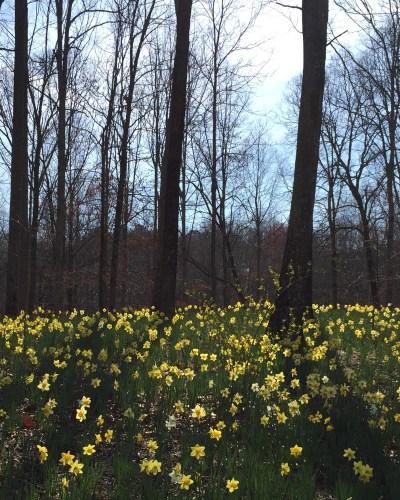 Atlanta To-Do: Gibbs Gardens