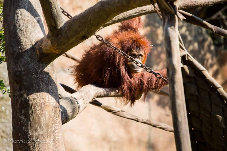 Explore the Sacramento Zoo