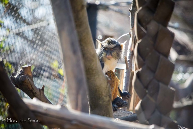 Explore the Sacramento Zoo