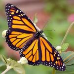 Ciri-ciri Umum dan Jenis-jenis Serangga Lengkap dengan Penjelasannya