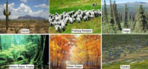Pembahasan Lengkap tentang Pengertian dan Tipe-tipe Ekosistem