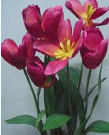 Gerak mekarnya bunga tulip pada suhu tertentu